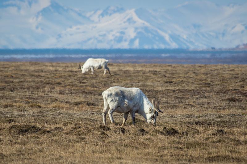 15-18.6.2012_Svalbard60.jpg