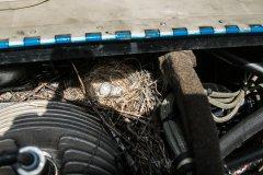 OH-PEP, västäräkki oli tenhyt pesän moottoritilaan. Eilen oli 3 ja nyt 4 munaa...30.6