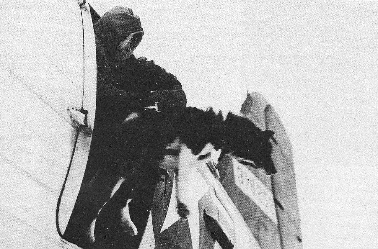 Karhukoirat sodassa.jpg